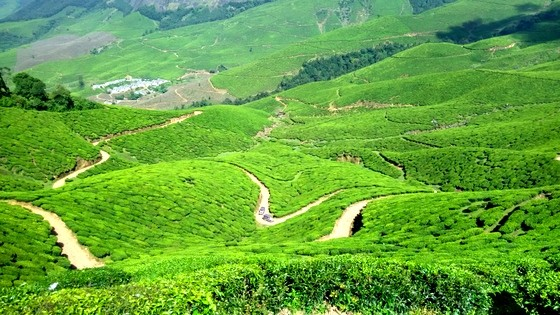 Less Touristy Than Munnar | Explore Chinnakanal Tea Fields kerala tea plantation