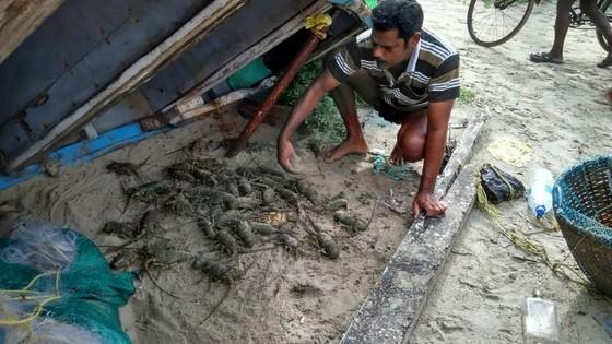 sorting lobster fish market kochi