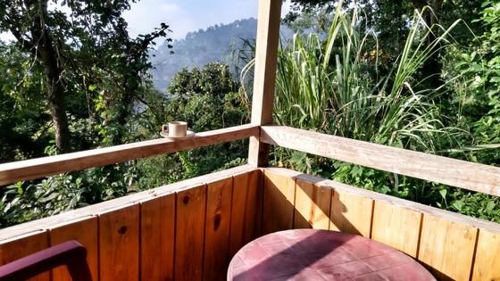 jungle resort assam
