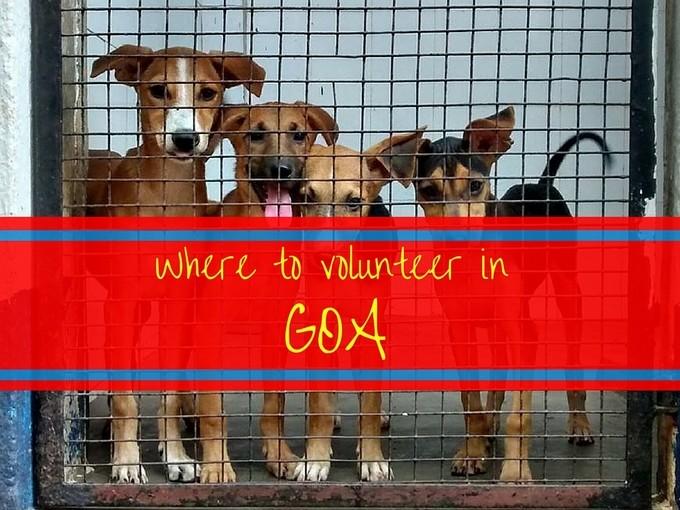 Where Can I Volunteer in Goa?