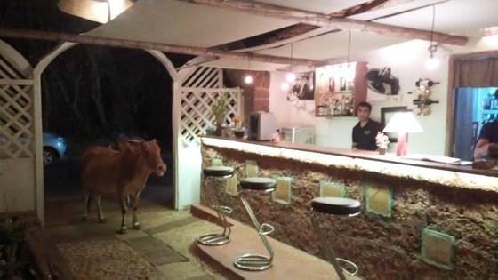 cow restuarant goa