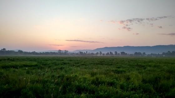 Endangered One Horned Rhinos at Kaziringa National Park