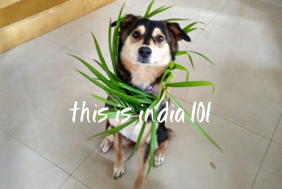 This is India! 101
