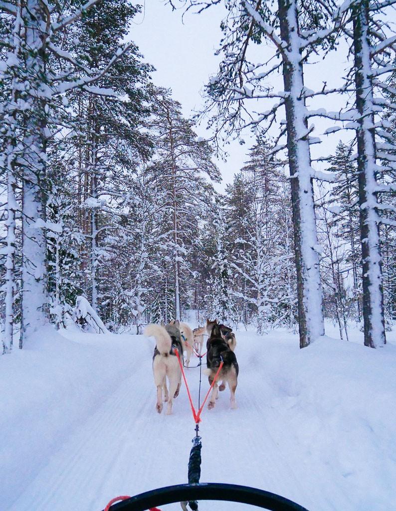 Dog Sledding in Finland