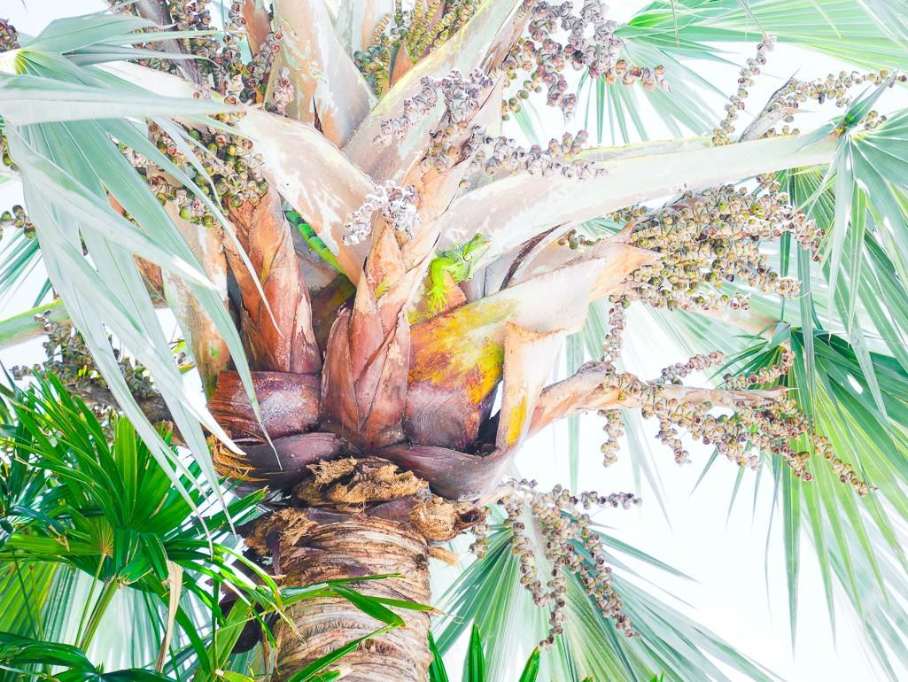 Exploring the Florida Keys