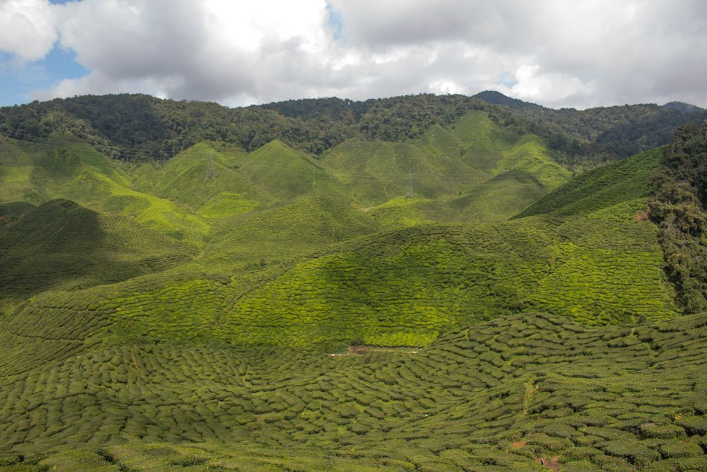 Tea Plantations in Cameron Highlands - travel expenses in southeast asia