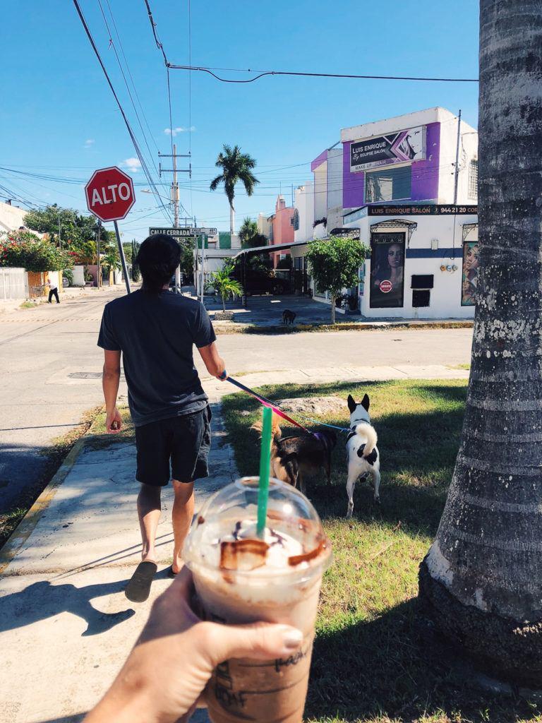 ben walking dogs merida