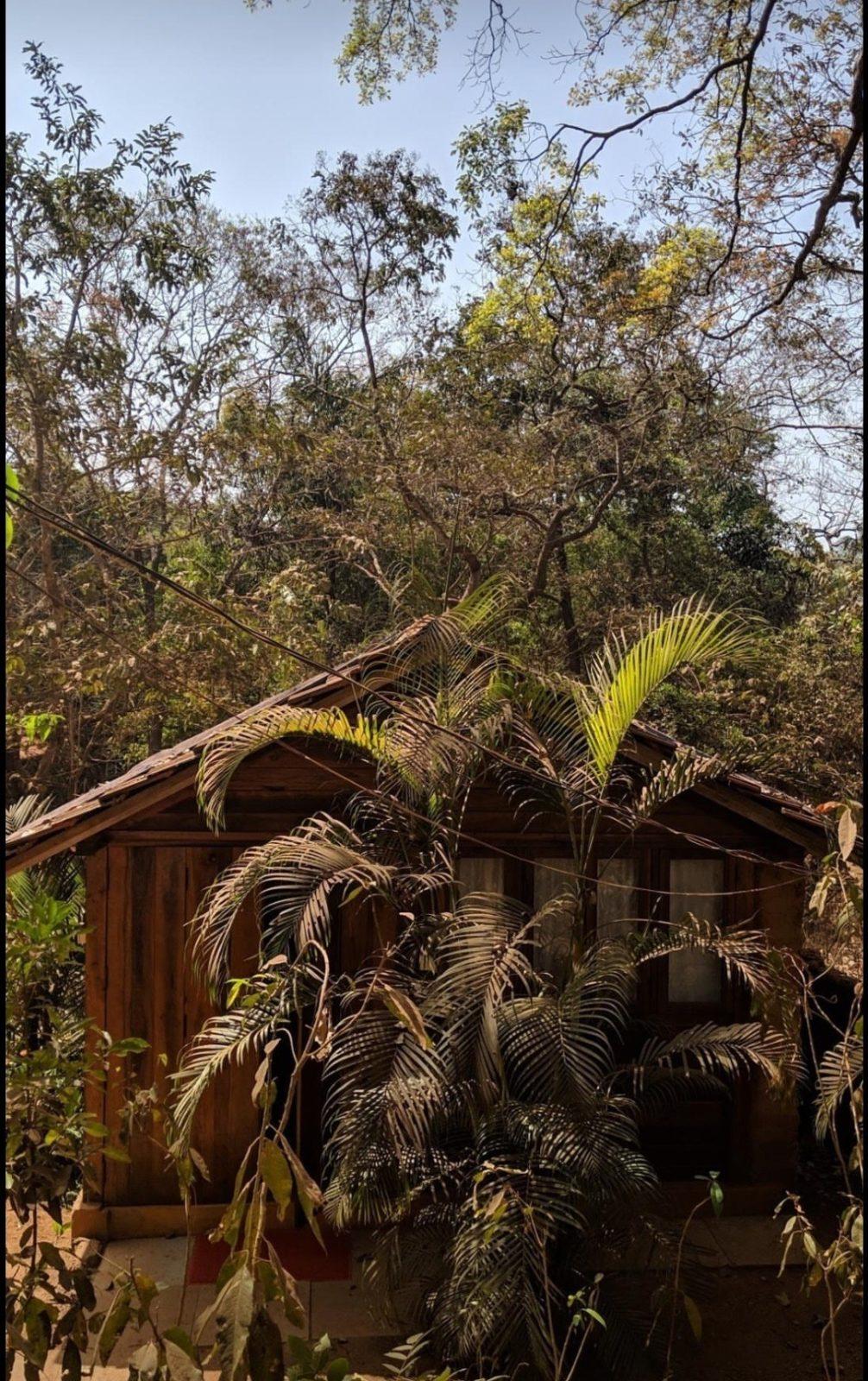 Namaste Jungle