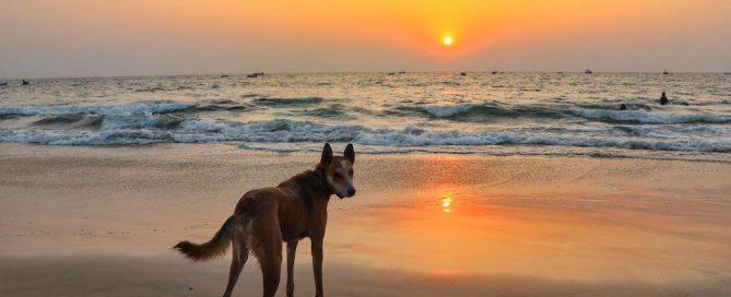 chulo sunset