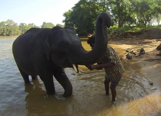 bathing elephants in india
