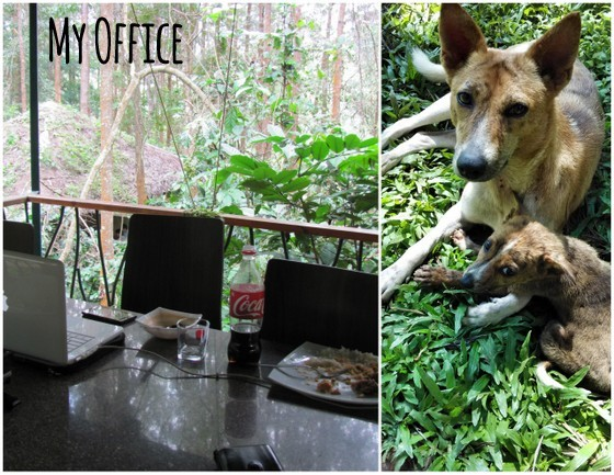 Where to Stay in BR Hills | Exploring with Gorukana