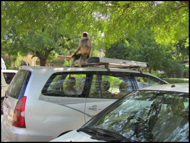 hire a car between udaipur and jodhpur