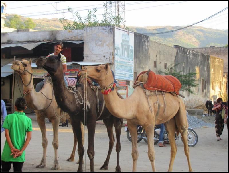 Pushkar india backpacking