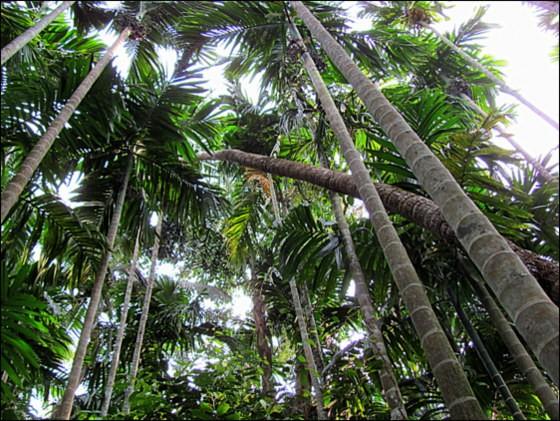 tropical spice plantation goa