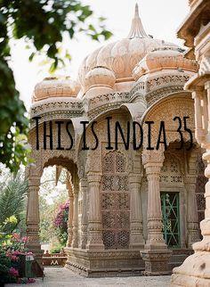 animal cruelty india